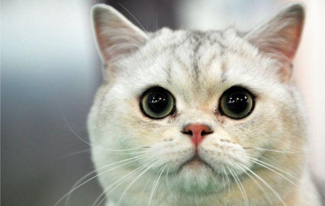 Erkek ve Dişi Kedi Kısırlaştırması