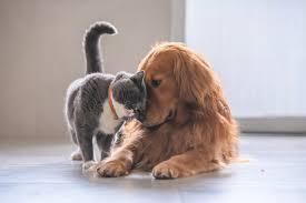 Evcil Hayvanların Tüylerinden Kurtulmanın Yolları