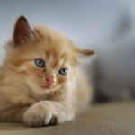 Ne Tür Kedi Kumu Kullanmalıyım?