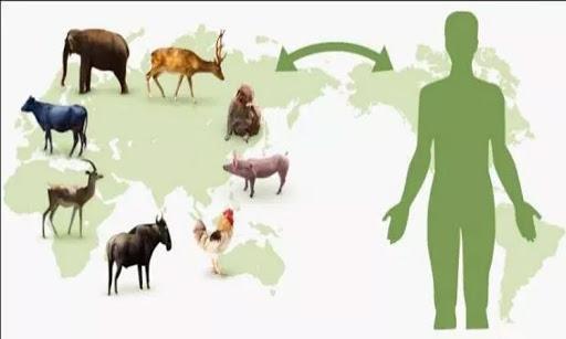 Zoonotik Hastalıkların Metagenomik Analizi