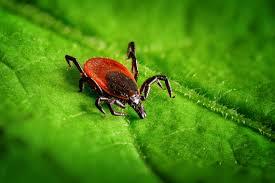 Zoonotik Hastalıkların Tanı Aracı Olarak Metagenomik